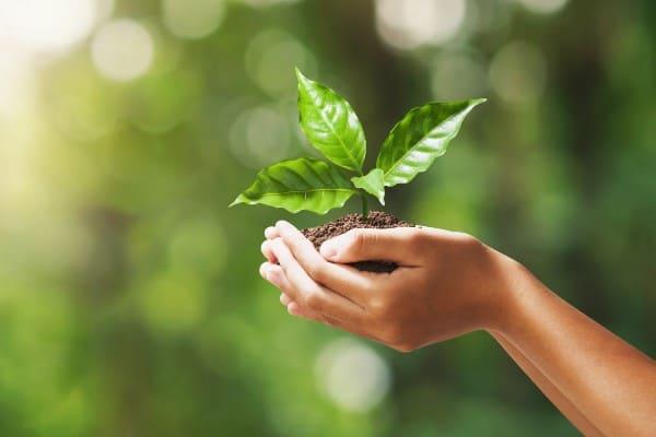 Pflanze als Symbol der Nachhaltigkeit